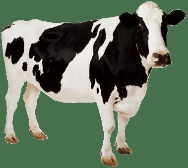 ultrassom veterinario sonoscape a5v bovinos